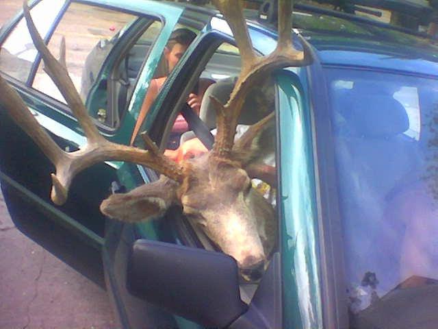 Bambi goin for a ride