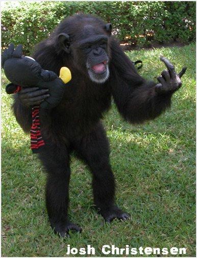 Chimp Middle Finger