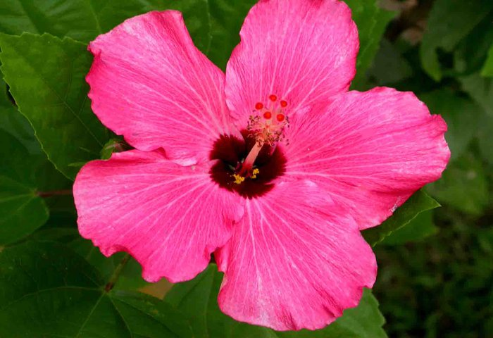 a gorgeous flower