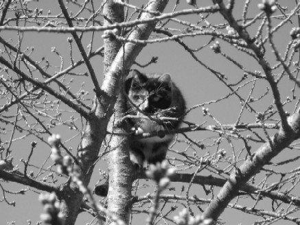 Tree Demon