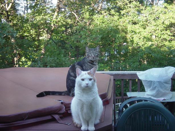 My Cats, dont mess with them