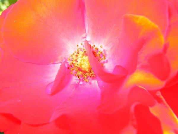 Inside of Flower