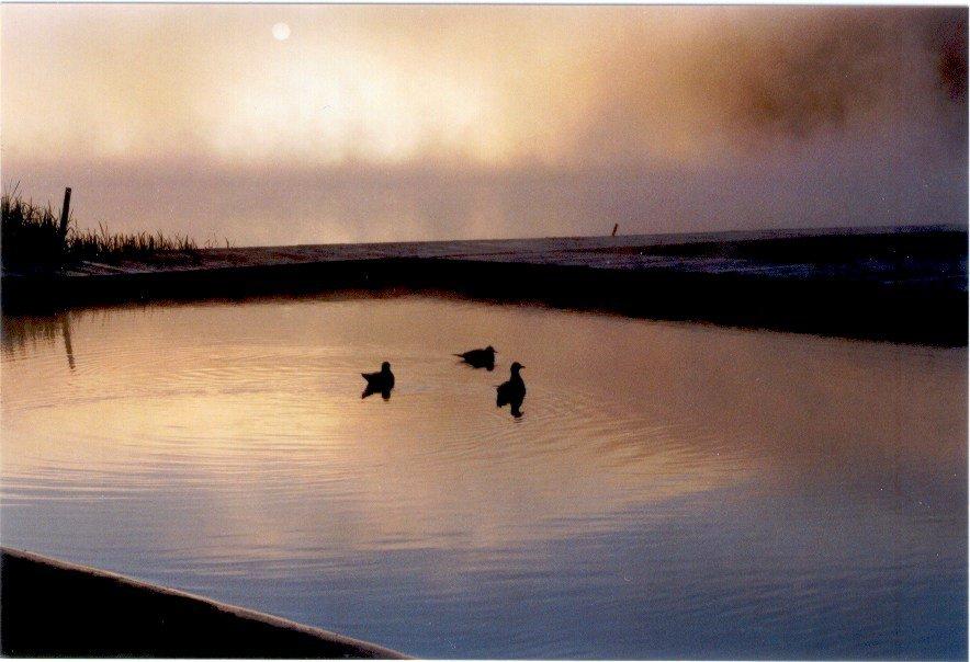 Ducks at dusk 2
