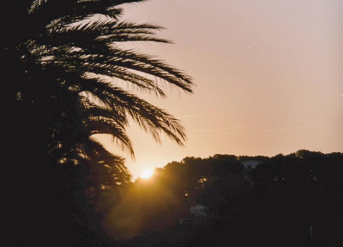 Sunrise with Palm