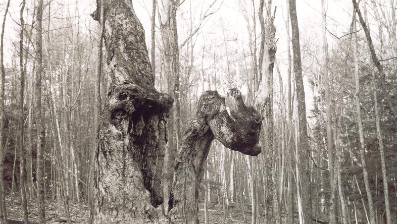 the same ollllllllld tree