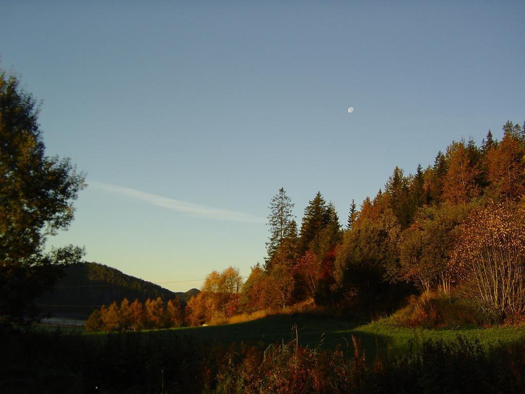 Autumn........allmost winter, I hope