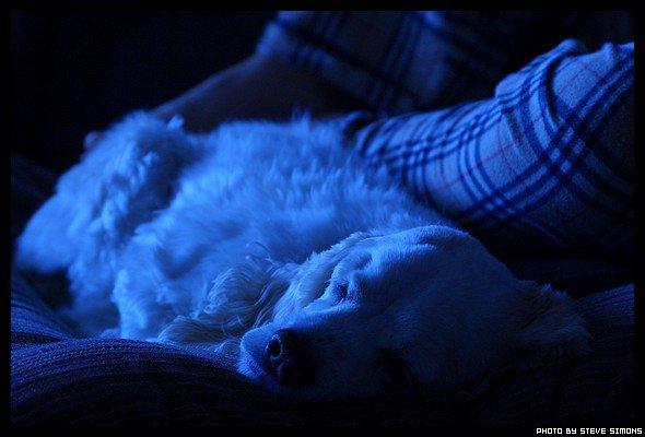 My dog, sleepin & such