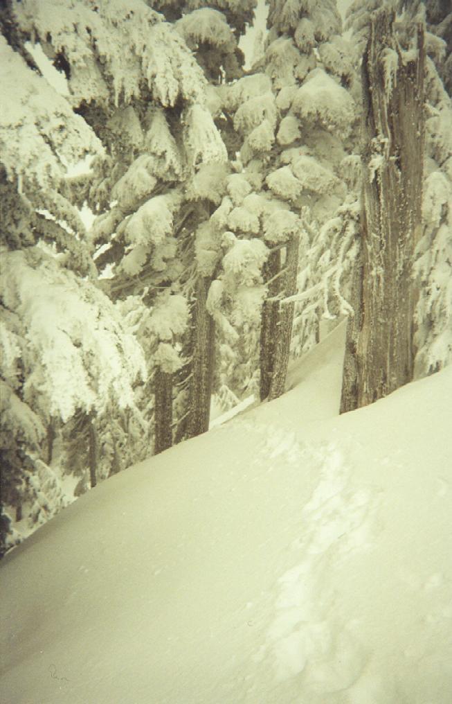 Quiet Powder Trees