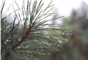 rain storm action