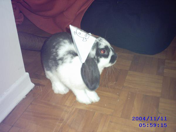 my bunny is a pirate