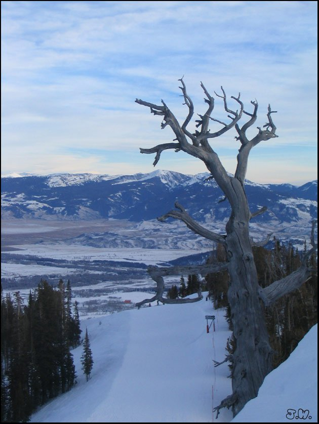Atop the Tram at Jackson Hole