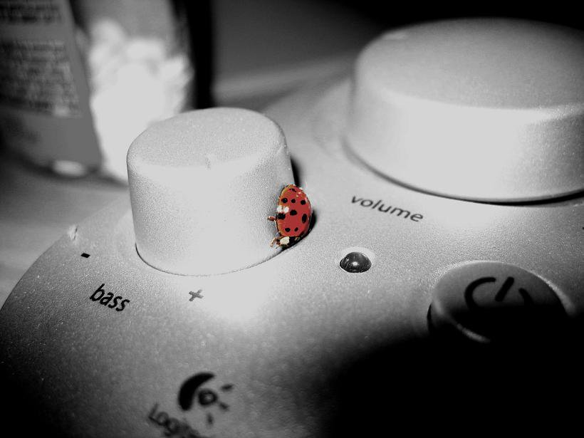ladybug infestation