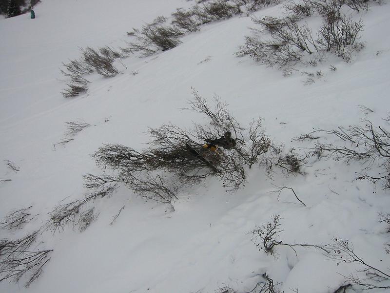 Boarder OWNED by a bush...got bark?