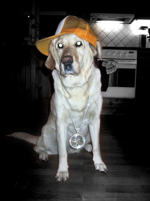 My dog with her bling bling;)