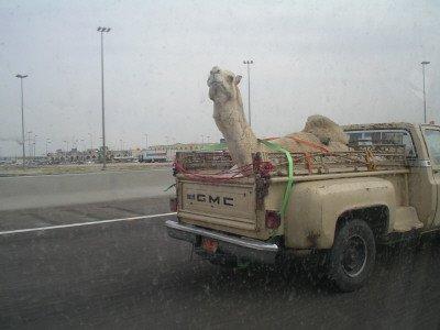 So my friends Dad was in Iraq....