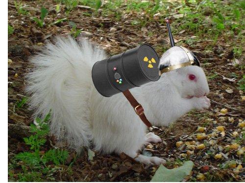 OMG missing My SQuirrel !~!!! HELP!111