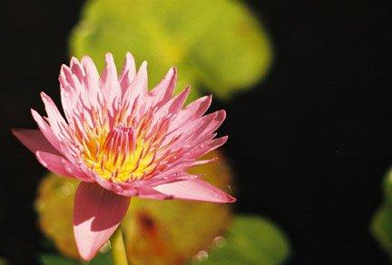 Cool Hawaiian Flower