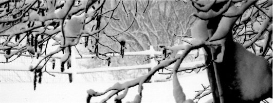Blizzard Spring 05