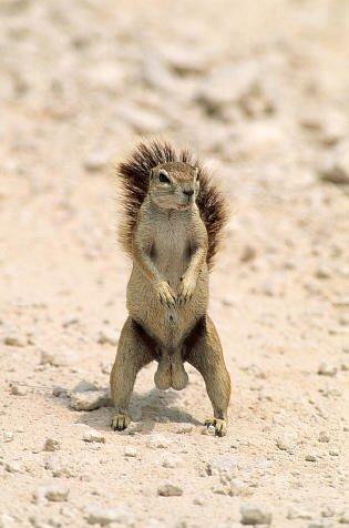 squirrels got balls
