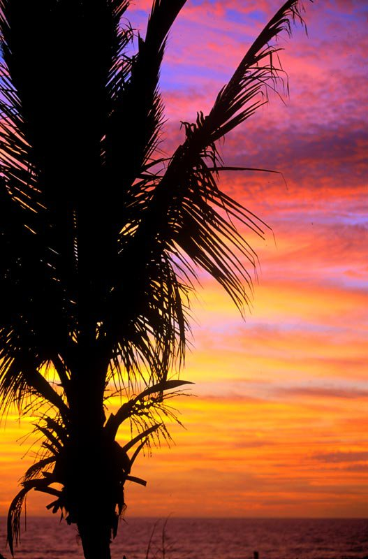 palm tree sunset at the beach