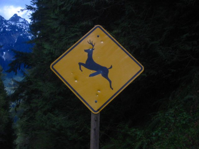 Deer signs are funny