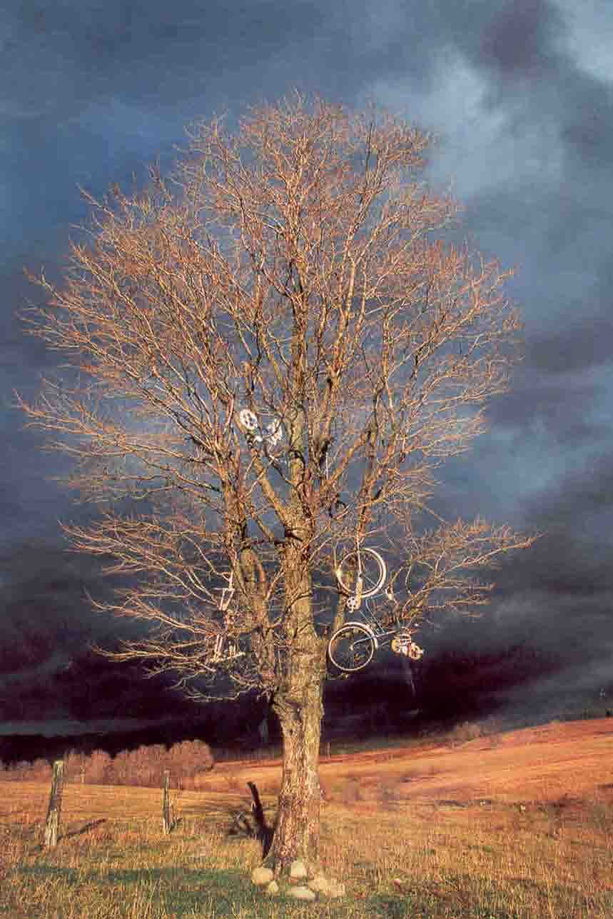 The Bike Tree