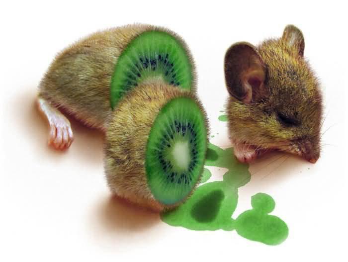 Kiwi Souris