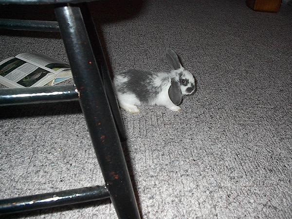 sally bunny