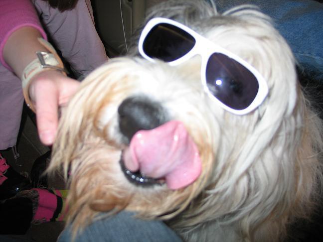 MY DOG'S A PIMP, BITCHEZ.