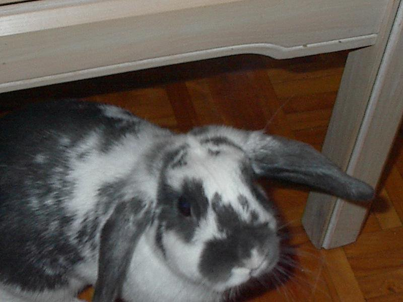 sally bunny...for forum