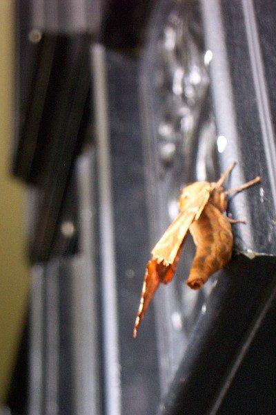 Door Under a Moth