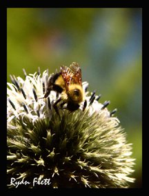 Spiked Bee