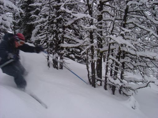 powder day in the trees...awesome photo