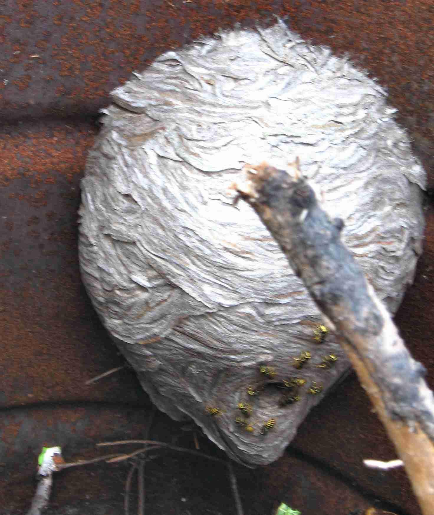 massive bee hive