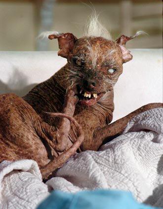 The Worlds Ugliest Dog