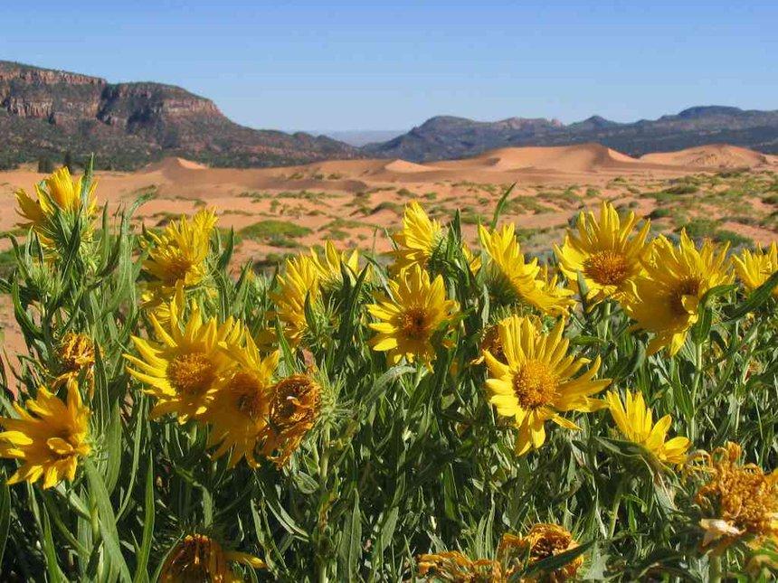 flowers n dunes