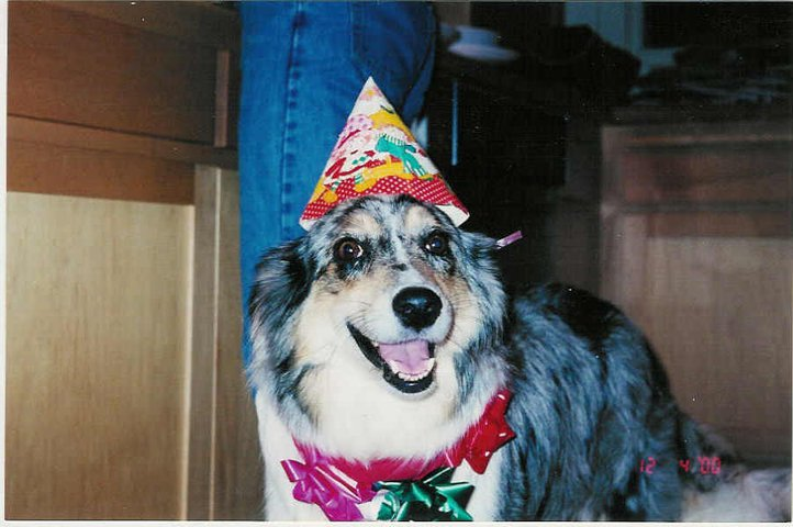 Party Animal!