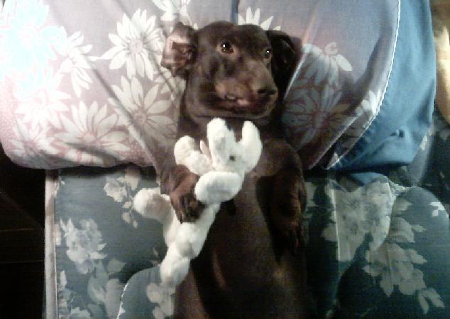 My Weiner Dog
