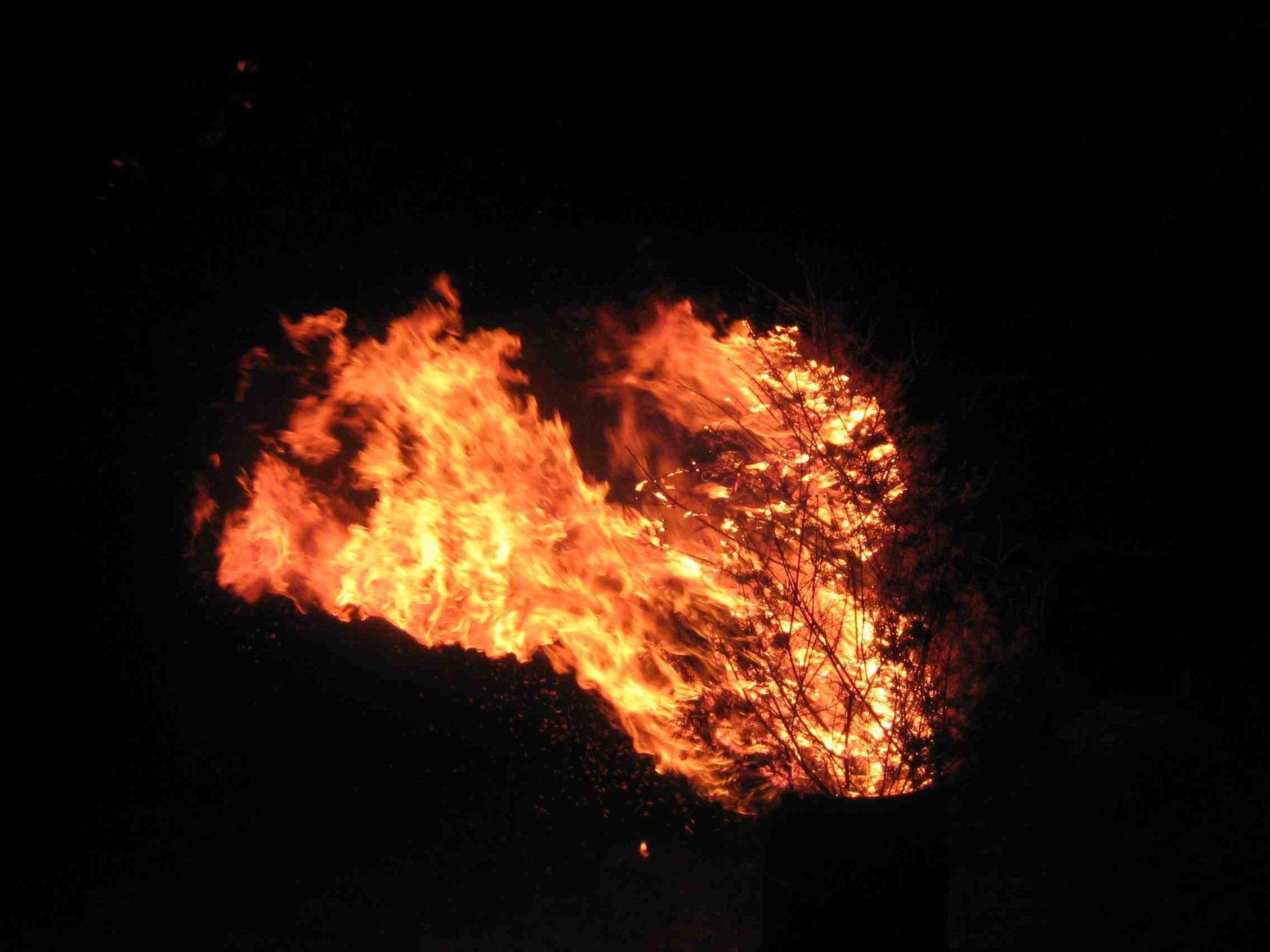 my tree is on fire