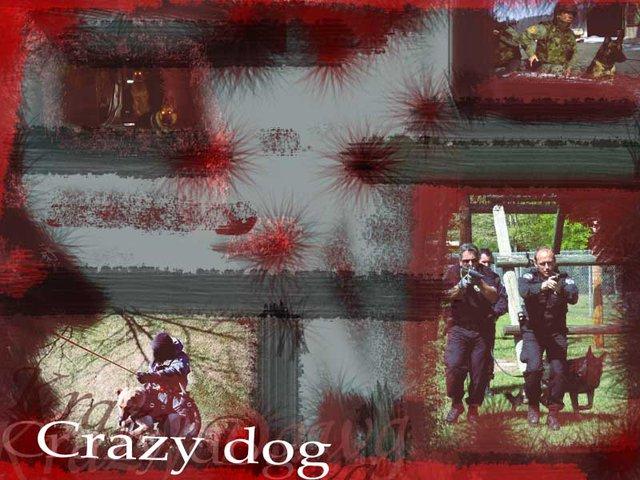 CrazyDog BG