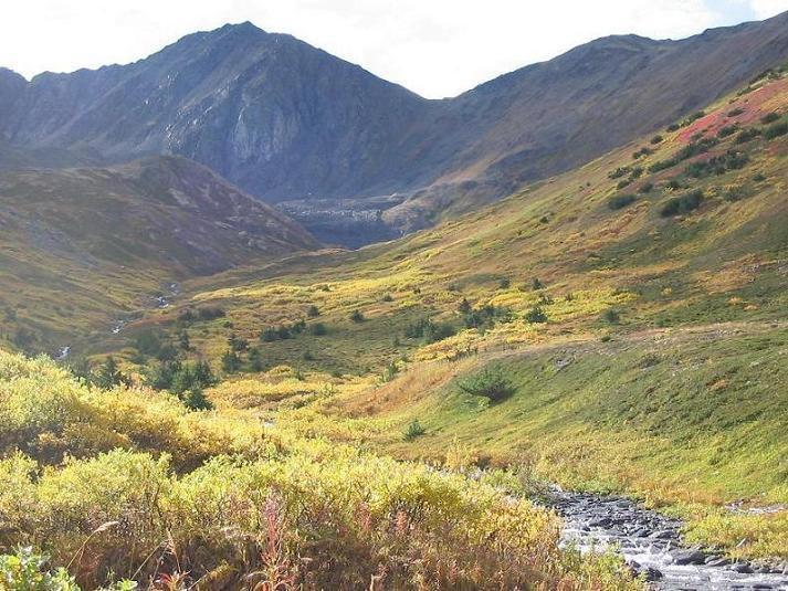 Alaska's fall colors.....