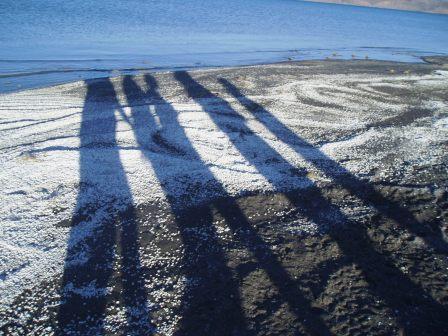 shadows on sea shells