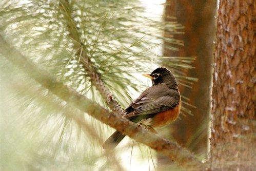Bird In Focus