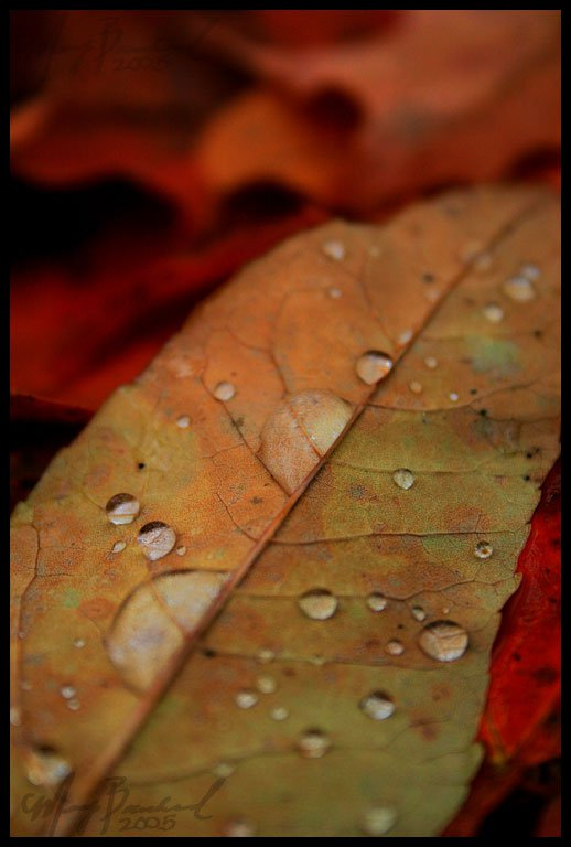 Fall droplets