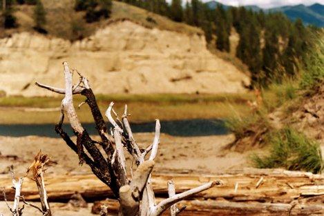 Dead Tree Branch @ Lake