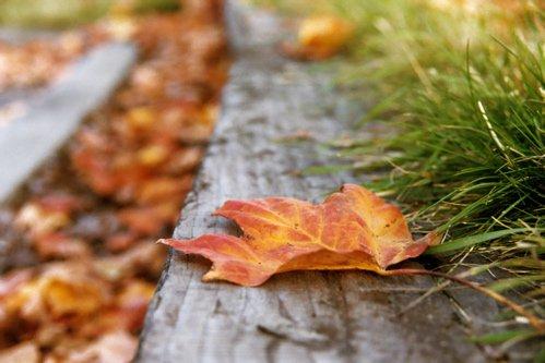 Leaf on side of road