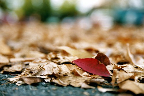 Leaves In Parking Lot