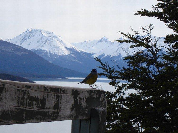nice bird with nice background