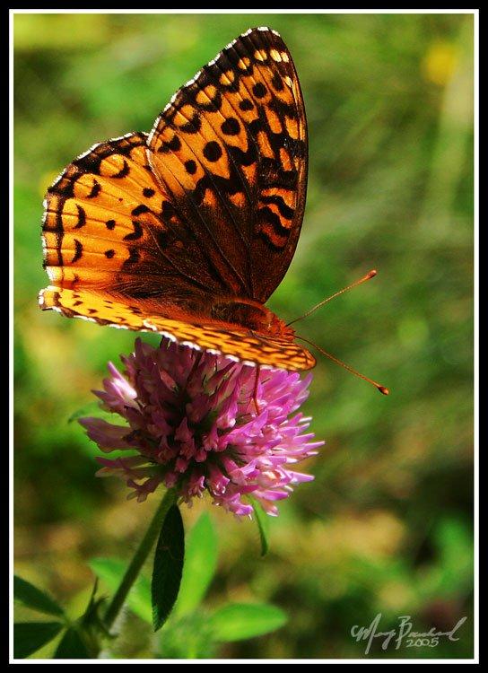 Flutterby Flower