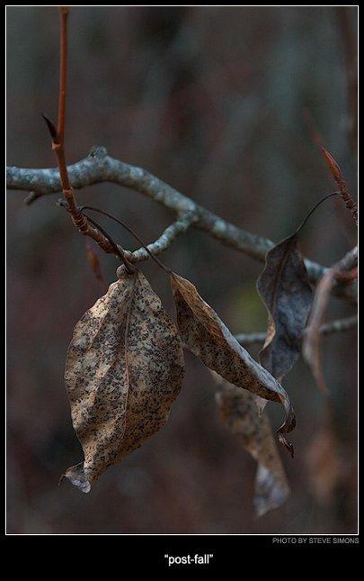 Post-Fall